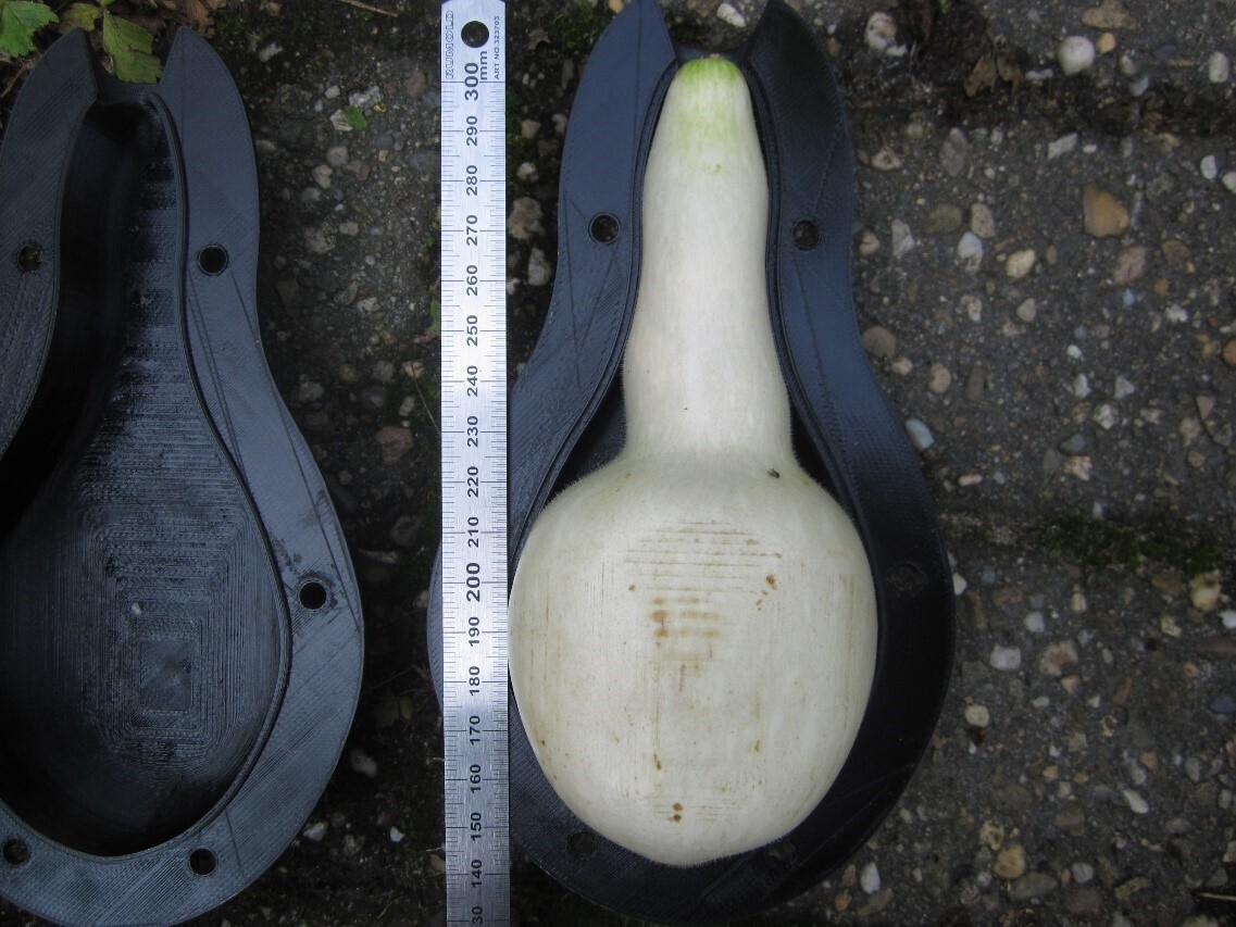 The calabash gourd (Lagenaria Siceraria) grows into a saddle shape made of biopolymers